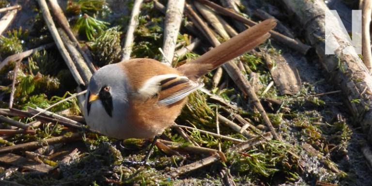 Spain Birding