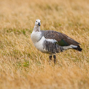 Chile Birding Tour