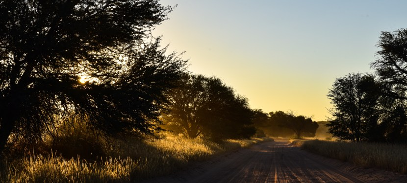 MTB in the Kruger