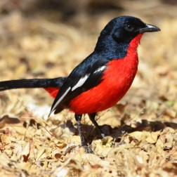 Endemic birds of Namibia