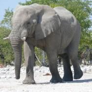 Etosha National Park with Nature Travel Namibia