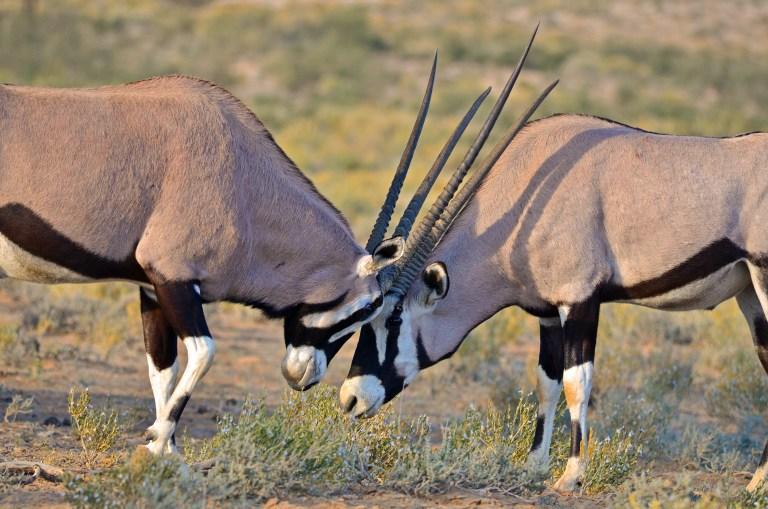 NamibiaIndependence (5)-2