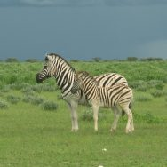 Green Season Special Namibia