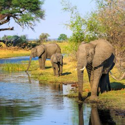African-Elephants-in-Bwabwata