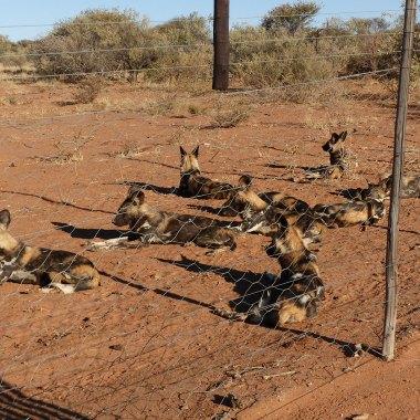 15-Day Namibia Conservation Safari