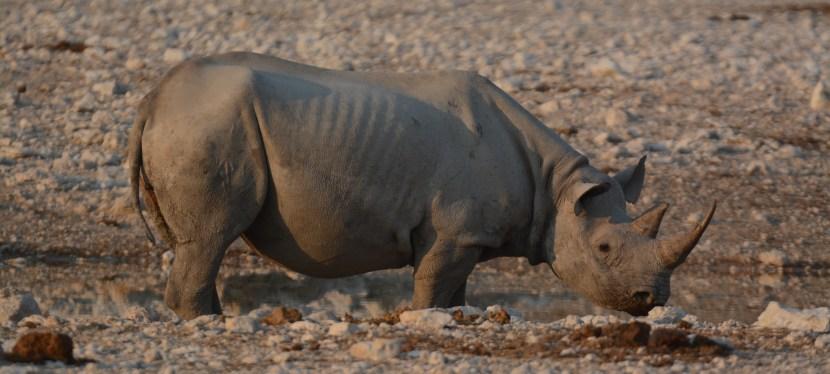 Save the Rhino Walking Safari