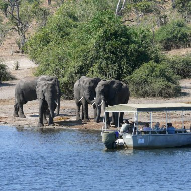 Boat-cruise-in-Chobe-(1)