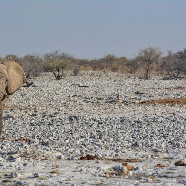 Etosha-scene-with-African-Elephant-and-Black-Rhinoceros