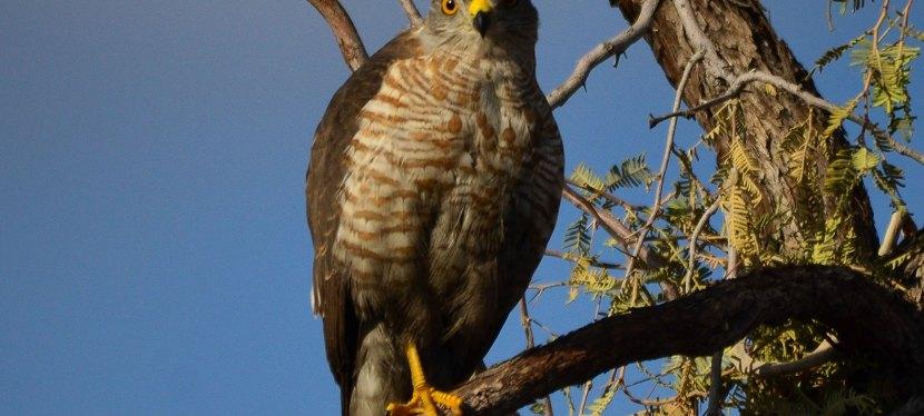 Namibia, Botswana & Zambia Birding