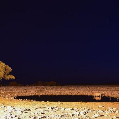 Western Nambia Safari