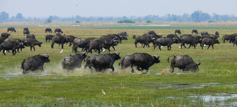Namibia Chobe & Vic Falls Safari