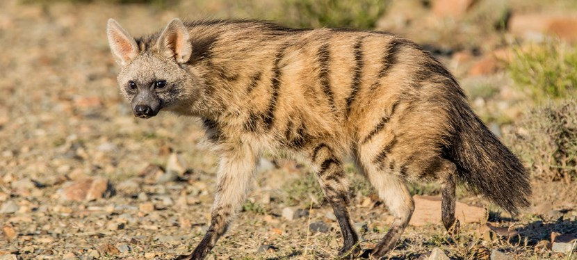 Namibia Mammal Safari Experience