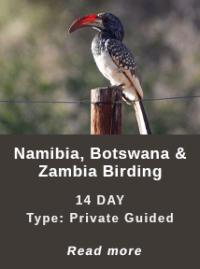 NBZ-Birding