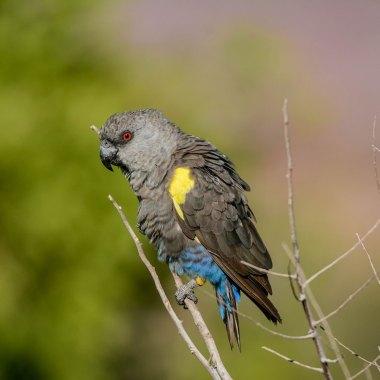 Namibia Birding
