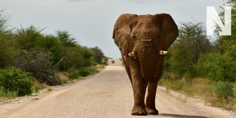 Namibia-Safaris-Contact