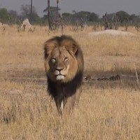 Open Letter to Walter Palmer, Murderer of Cecil the Lion