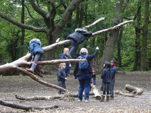 granton-primary-free-nature-school-forest-school-streatham-common-lambeth-11