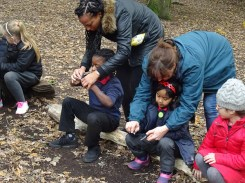 streatham-common-granton-primary-school-free-nature-school-forest-school-lambeth-6