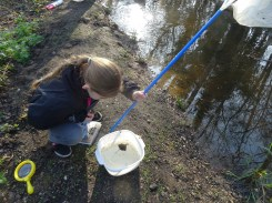 Granton Primary Year 5 students pond dipping Lambeth-5