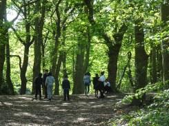 Free after school forest school Fern Lodge Streatham Common Lambeth London-2