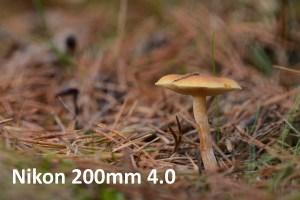 Baggrundsgengivelse 200 mm makro