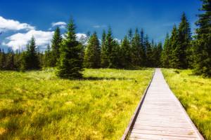 Holzsteg ins Moor bei Gottesgab