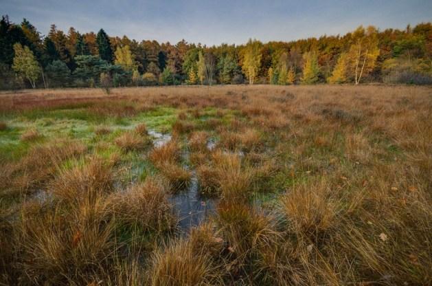 swamp-1017458_960_720