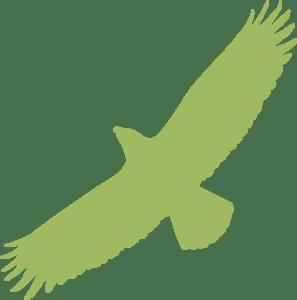 Greifvogel