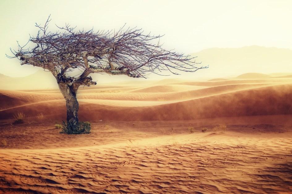 Eine Wüste mit gleißender Sonne, heißem Strand und einem verdorrten Baum.