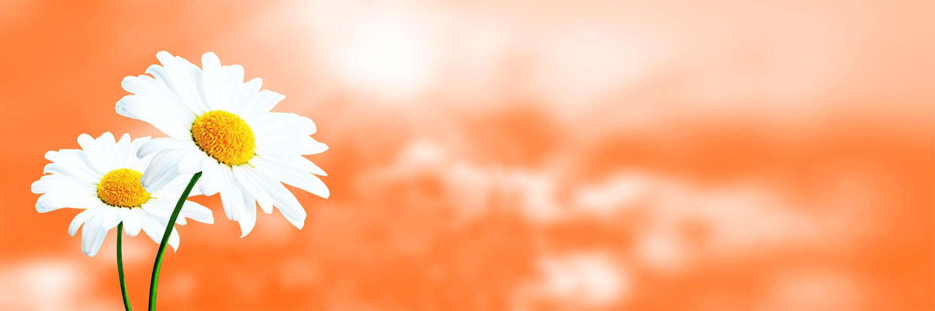 Naturheilpraxis Lüders, Maria-Theresia Lüders, gute Heilpraktikerin Münster, Klassische Homöopathie, Synergetische Homöopathie, Ganzheitliche Raucherentwöhnung, Rauchentwöhnung, Rauchfrei-Spritze, Rauchen aufhören, Mesotherapie, Vitamin C Hochdosis Infusion, Dorn-Breuss Rückenbehandlung, Schröpfkopfbehandlungen, Klopfakupressur Mentalfeldtechnik, Behandlung von ADHS bei Kindern