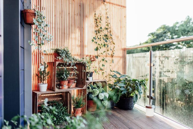 escoger plantas para decorar
