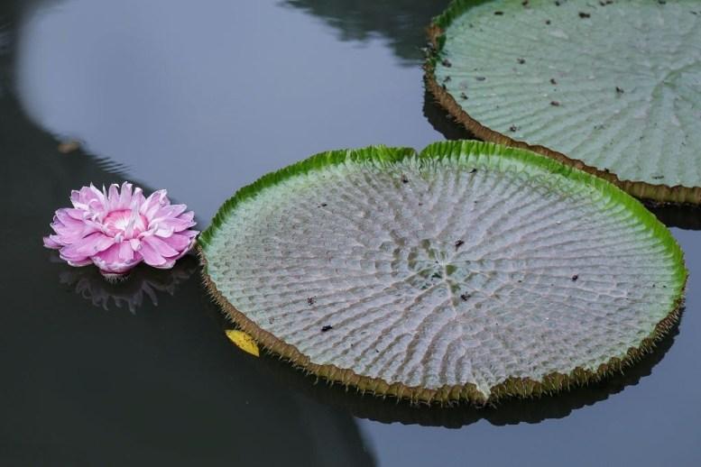 mejores plantas acuáticas para el hogar