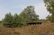 Bienenstöcke in der Lüneburger Heide