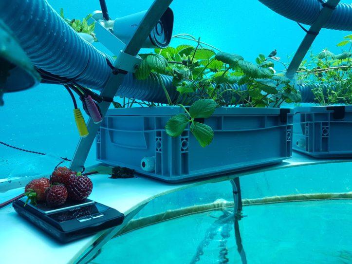 Coltivazione subacquea