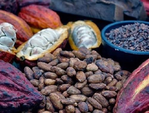 Variétés de fèves de cacao