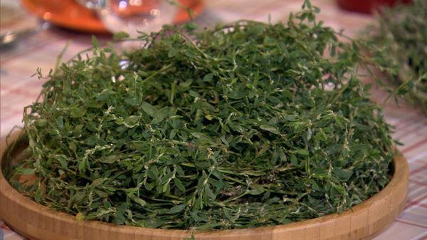 varicoză grass collection