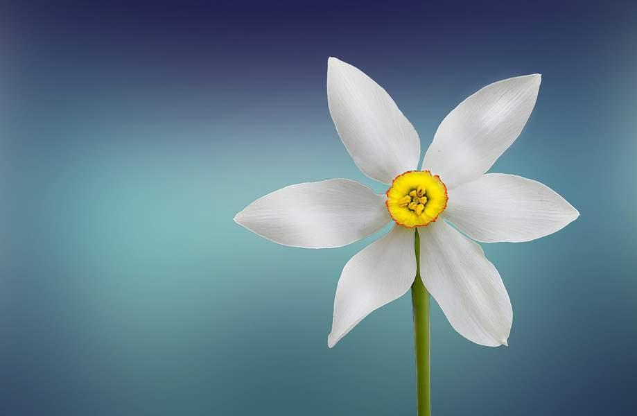nature-blossom-plant-white-photography-wheel-1231113-pxhere.com_1440x940