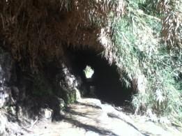 Natürlicher Schilfgras-Tunnel