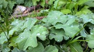 Regentropfen am Morgen