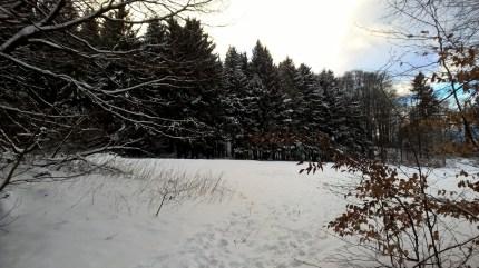 Im Nadelwald