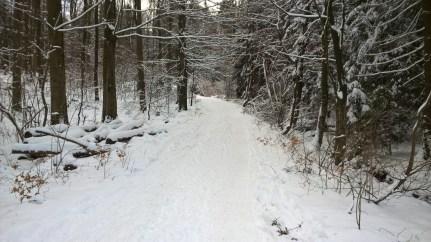 Waldweg zur Höhe
