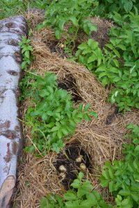Selvforsyner i egen have - No-dig, dækning og dyrkning i andre materialer. @ Naturplanteskolen | Hedehusene | Danmark
