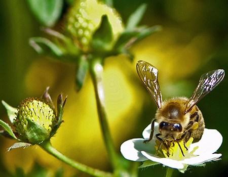 Bi- og insektvenlige planter