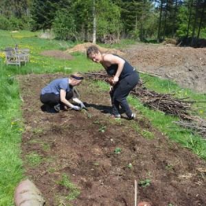 Jord, kompost, regnorme og måske endda intelligent liv @ Naturplanteskolen | Hedehusene | Danmark