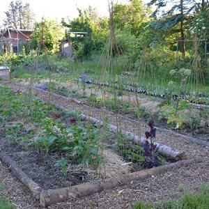Klimabede og flerårig køkkenhave @ Naturplanteskolen | Hedehusene | Danmark