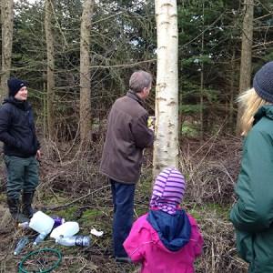 Lær at tappe birkesaft @ Naturplanteskolen | Hedehusene | Danmark