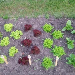 Min nemme køkkenhave @ Naturplanteskolen | Hedehusene | Danmark