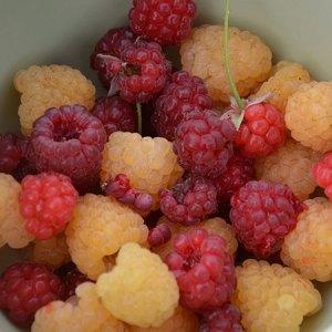Frugt- og bærdag på Naturplanteskolen @ Naturplanteskolen | Hedehusene | Danmark