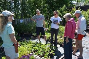 Aftenrundvisning i de spiselige blomsters verden @ Naturplanteskolen | Hedehusene | Danmark