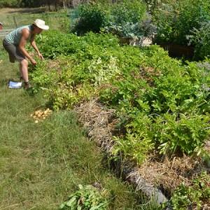 Økologisk høstmarked @ Naturplanteskolen | Hedehusene | Danmark